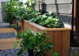 Compacte tuinen